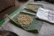 Ant larvae for sale in the market